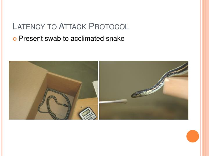 Latency to Attack Protocol