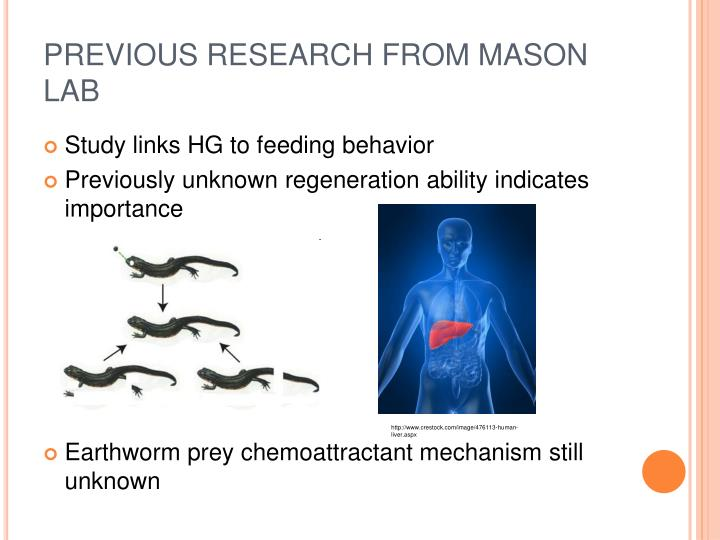 PREVIOUS RESEARCH FROM MASON LAB