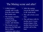 the mating scene and after