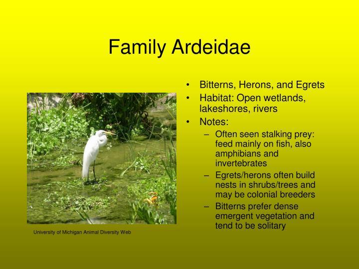 Family Ardeidae