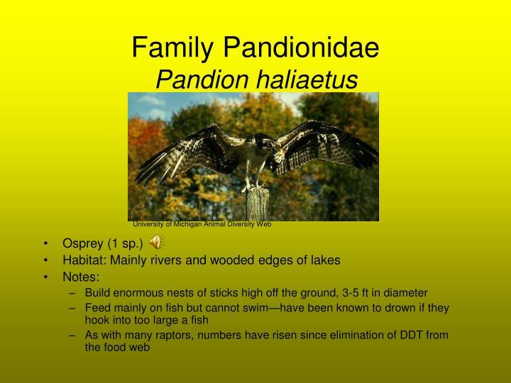 Family Pandionidae
