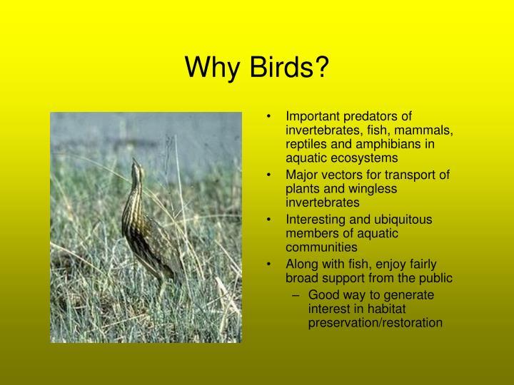 Why Birds?