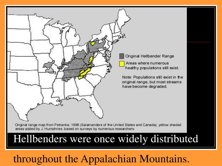 Hellbenders were once widely distributed