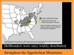 hellbenders were once widely distributed throughout the appalachian mountains