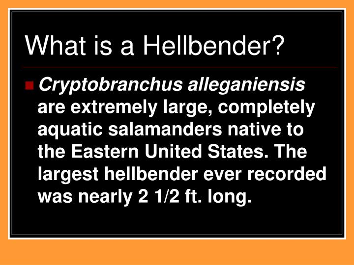 What is a Hellbender?