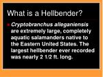 what is a hellbender