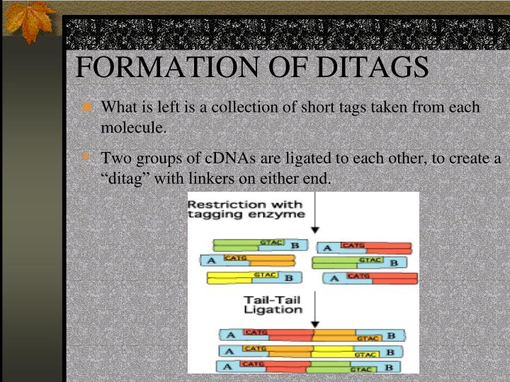 FORMATION OF DITAGS