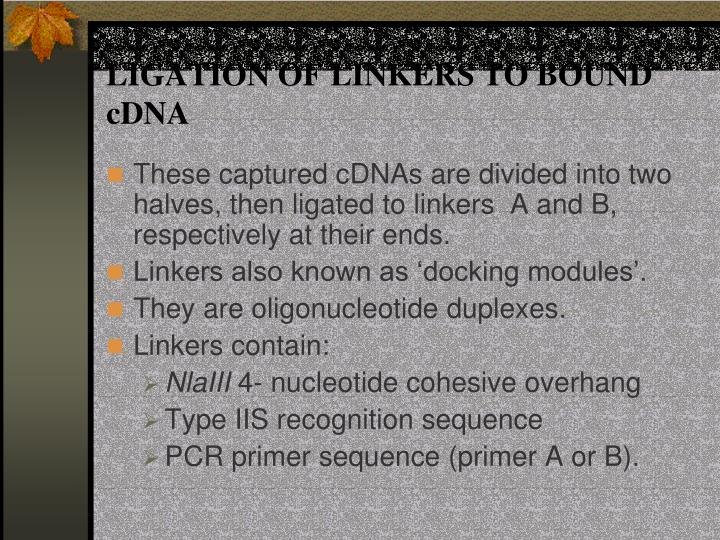 LIGATION OF LINKERS TO BOUND cDNA