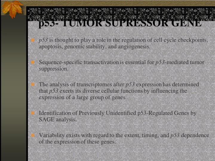 p53- TUMOR SUPRESSOR GENE