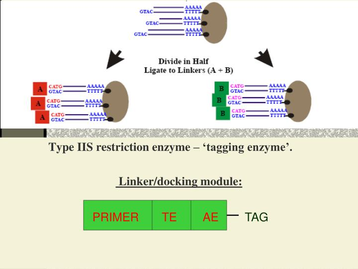 Type IIS restriction enzyme – 'tagging enzyme'.