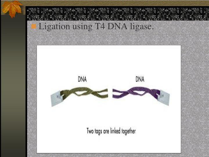 Ligation using T4 DNA ligase.