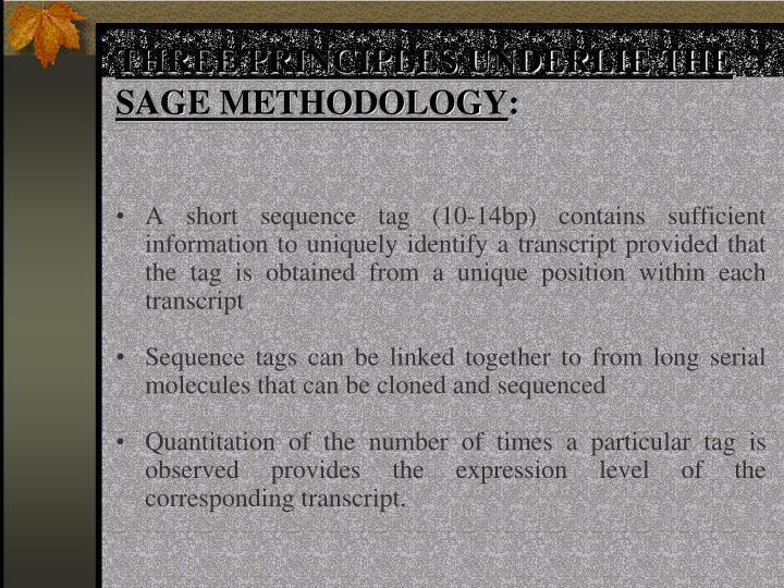 THREE PRINCIPLES UNDERLIE THE SAGE METHODOLOGY