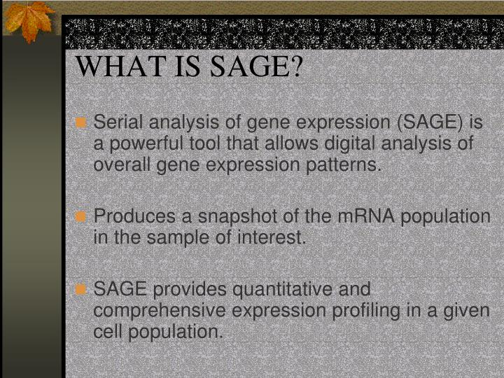 WHAT IS SAGE?