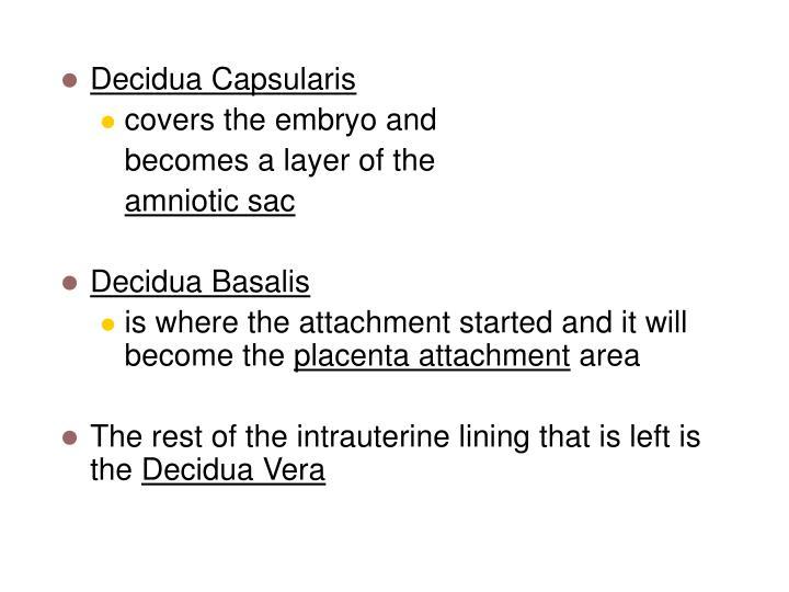 Decidua Capsularis