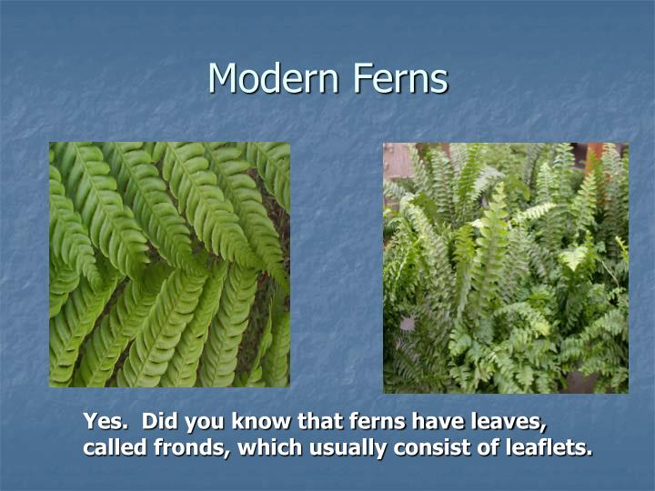 Modern Ferns