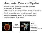 arachnida mites and spiders