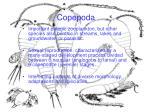 copepoda