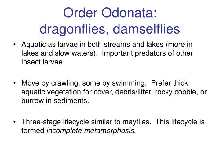 Order Odonata: