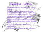 rotatoria rotifers