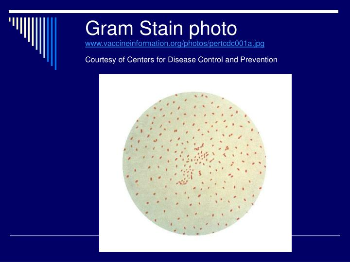 Gram Stain Control Slide Images