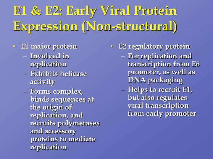 E1 major protein