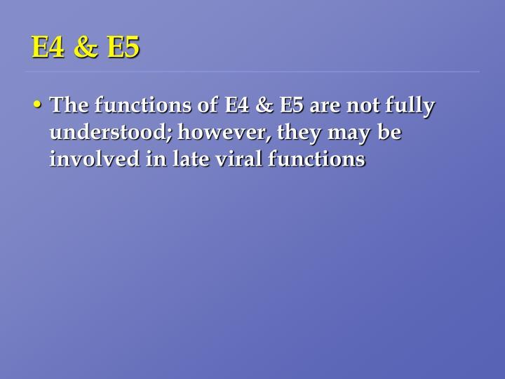 E4 & E5