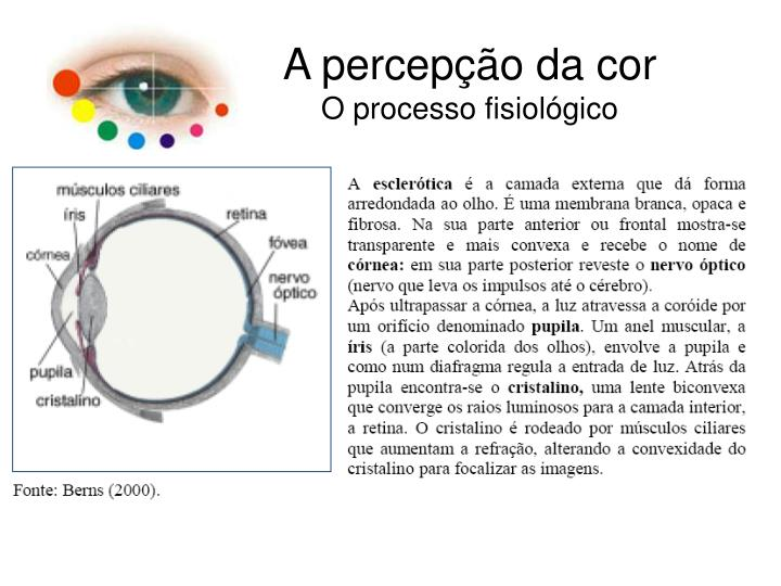 A percepção da cor