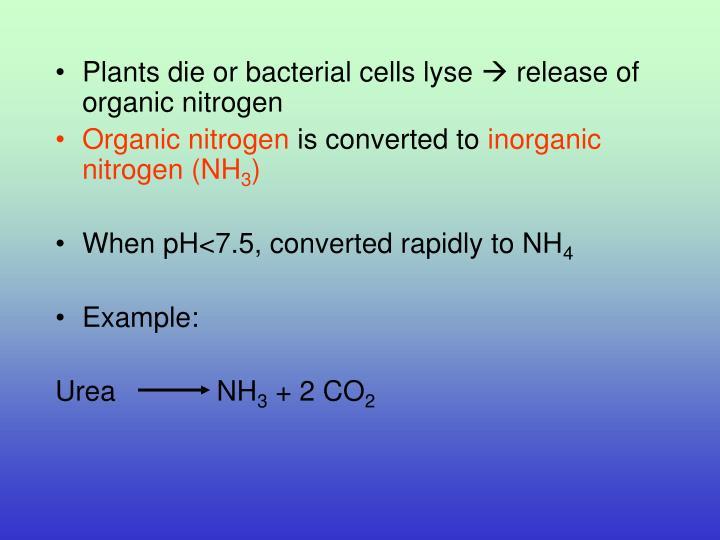 Plants die or bacterial cells lyse