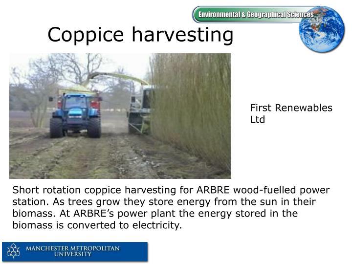 Coppice harvesting