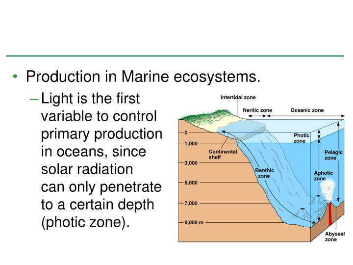 Production in Marine ecosystems.