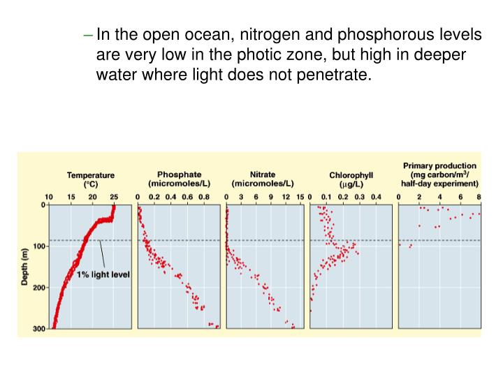 In the open ocean, nitrogen and phosphorous levels are very low in the photic zone, but high in deeper water where light does not penetrate.