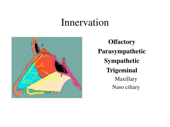 Ppt Nasal Cavity Amp Post Nasal Space Powerpoint