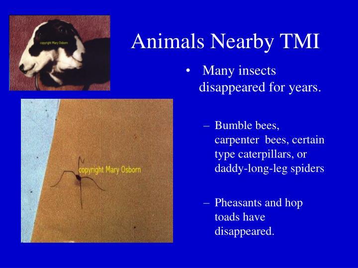 Animals Nearby TMI