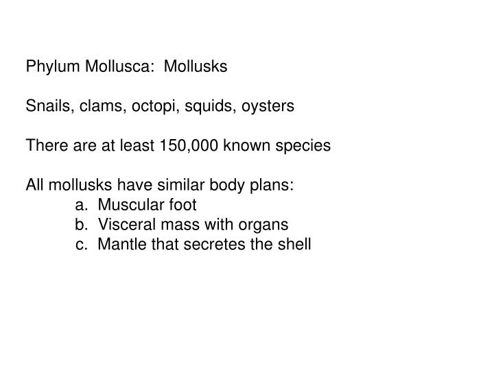 Phylum Mollusca: Mollusks