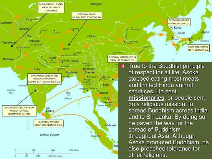True to the Buddhist principle of respect for all life, Asoka stopped eating most meats and limited Hindu animal sacrifices. He sent