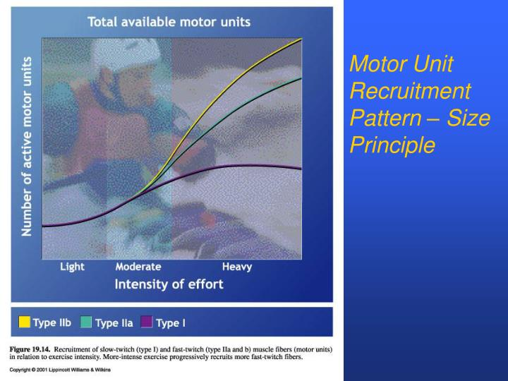 Motor Unit Recruitment Pattern – Size Principle