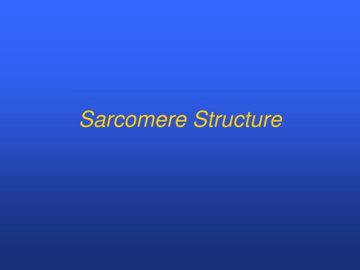 Sarcomere Structure