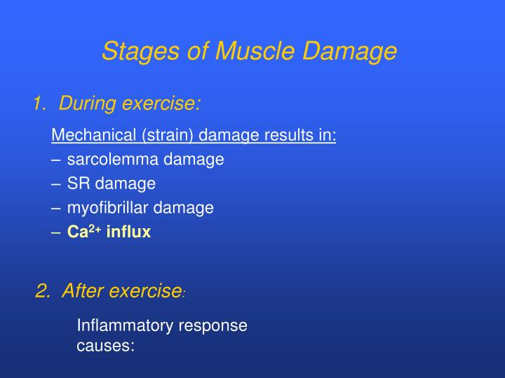 Stages of Muscle Damage