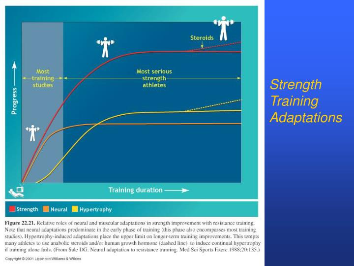 Strength Training Adaptations