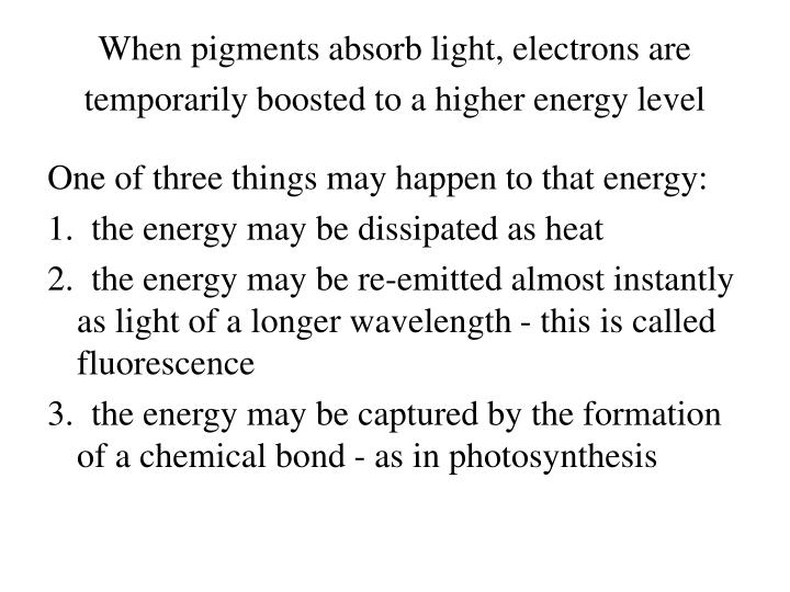 When pigments absorb light, electrons are temporarily boosted to a higher energy level