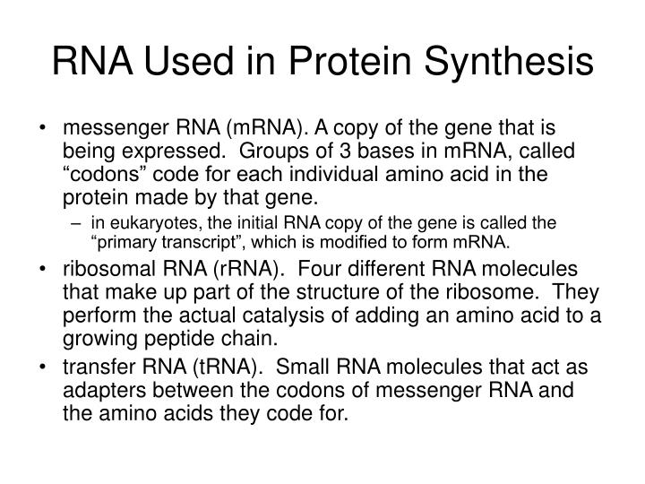 RNA Used in Protein Synthesis