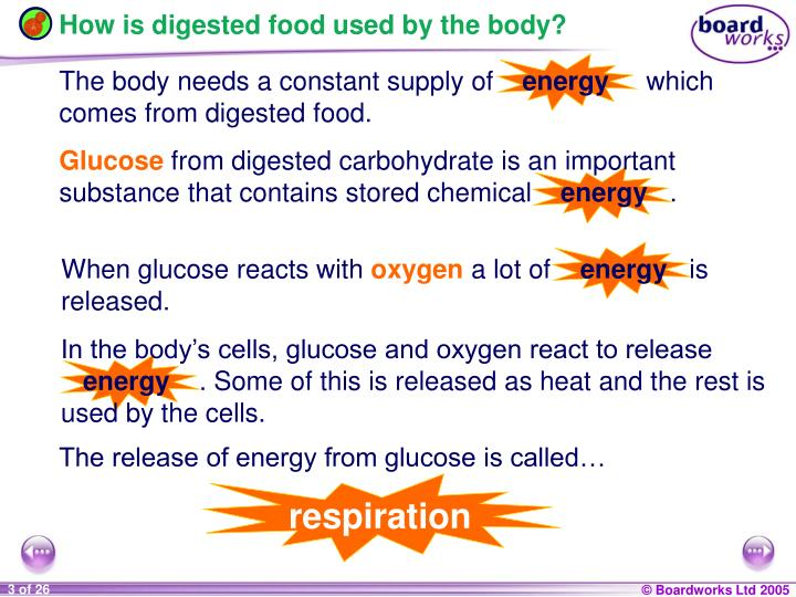 How is digested food used by the body