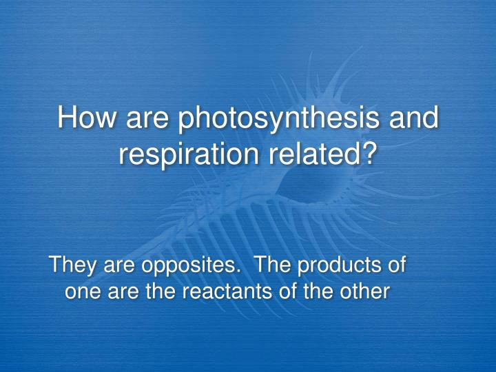 How are photosynthesis and respiration related?