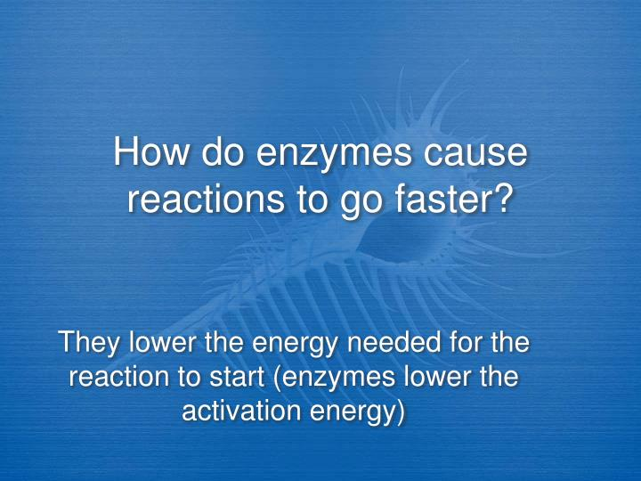 How do enzymes cause reactions to go faster?