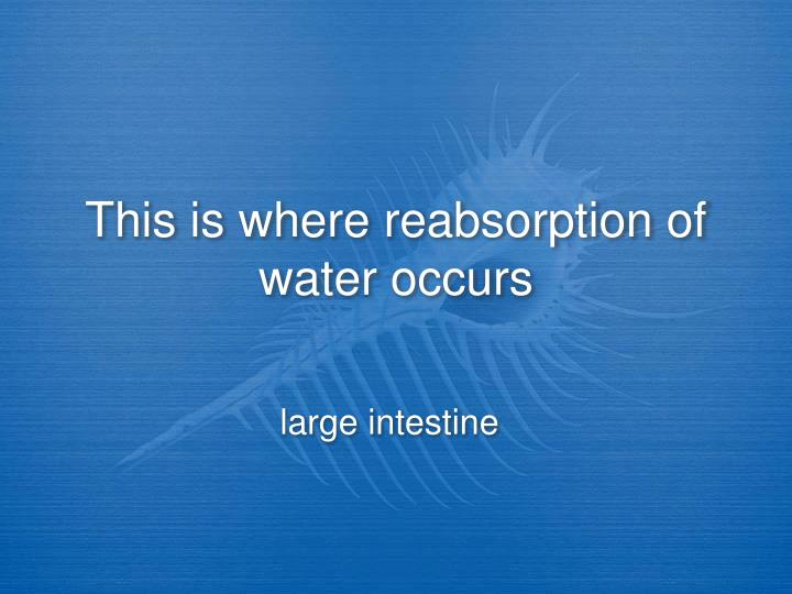 This is where reabsorption of water occurs