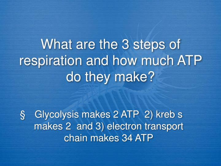 What are the 3 steps of respiration and how much ATP do they make?