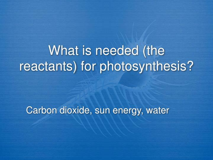 What is needed (the reactants) for photosynthesis?