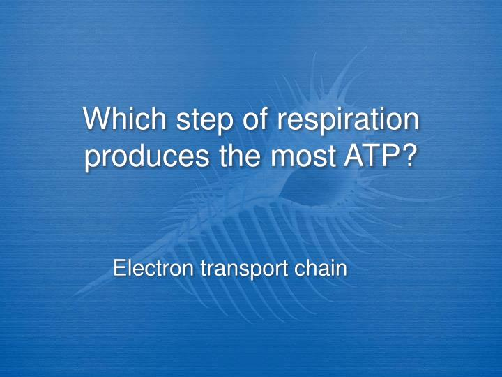 Which step of respiration produces the most ATP?