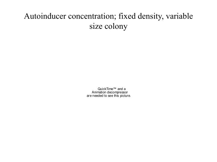 Autoinducer concentration; fixed density, variable size colony
