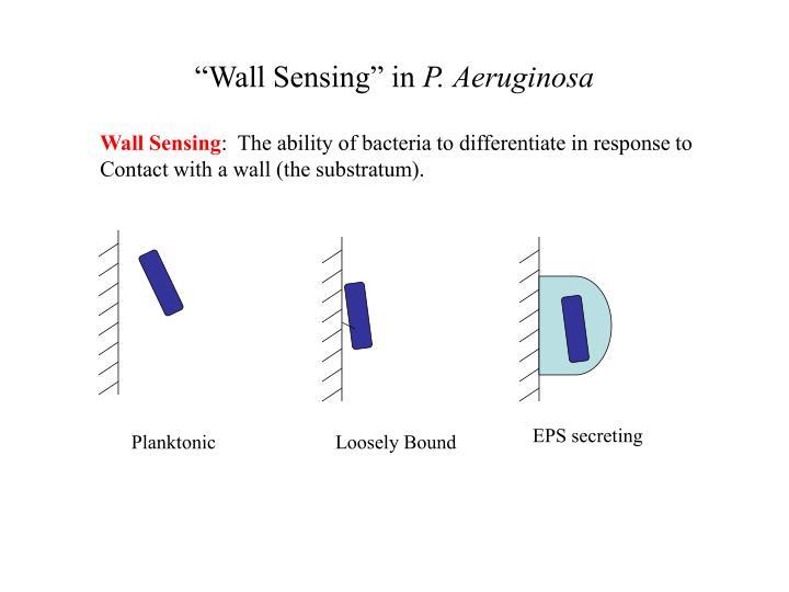 """Wall Sensing"" in"